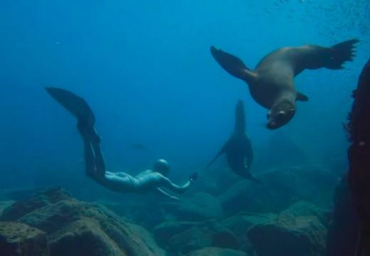 Danse avec les lions de mer