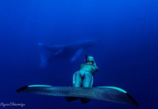 à la rencontre des baleines à bosses!