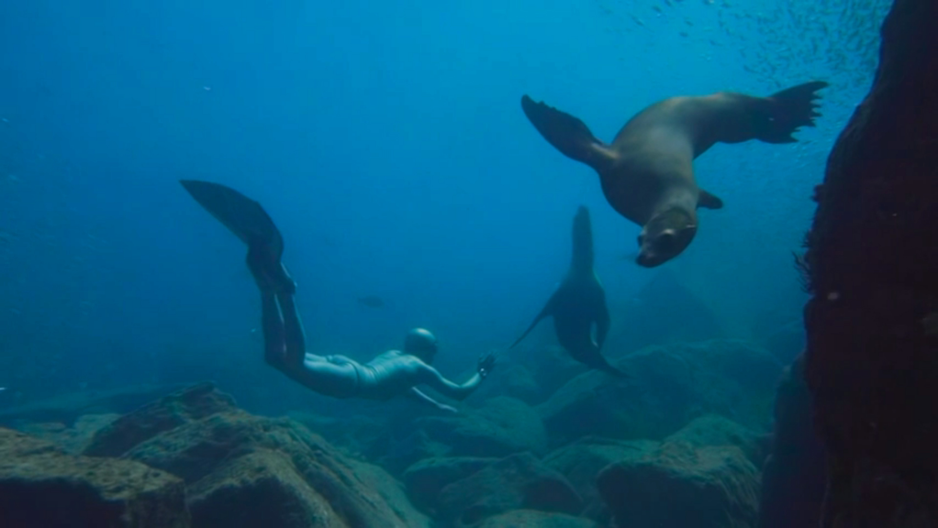 tourreau lions de mer